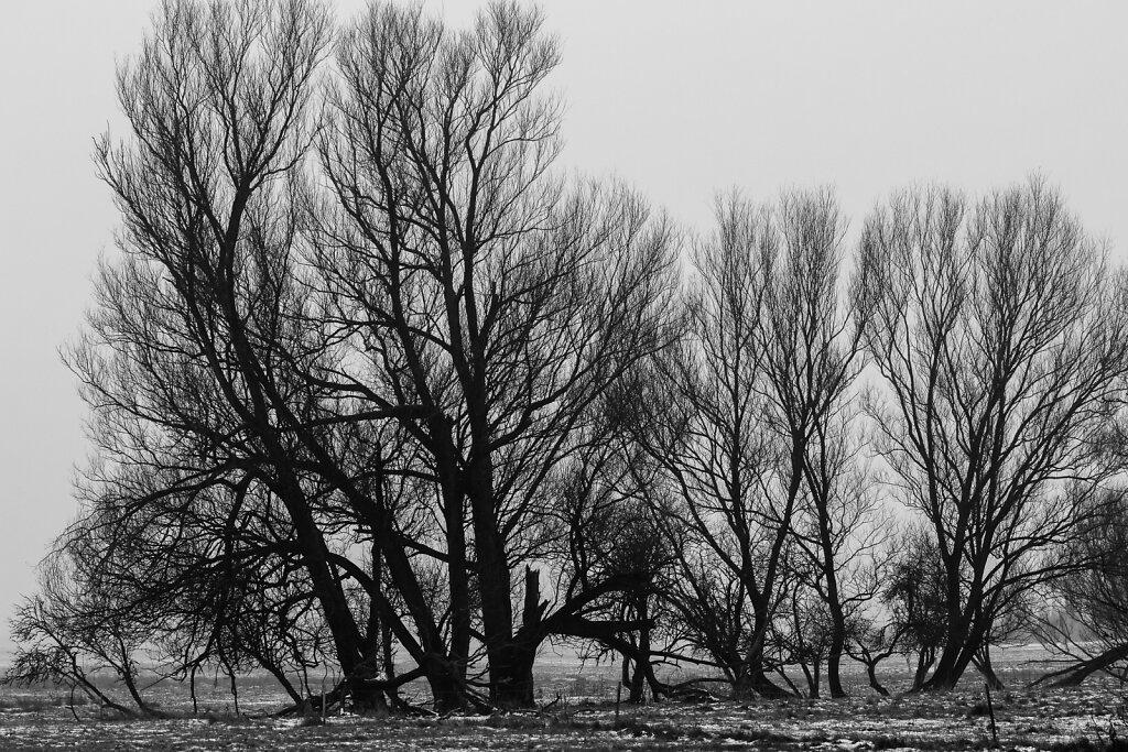 2014-12-31-Silvester-Albrechtsthal-44-von-51.jpg